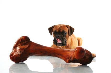 dogandbigbone