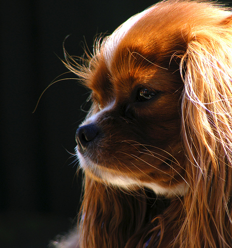 Should you trim your dog's whiskers? | Humans for Dogs