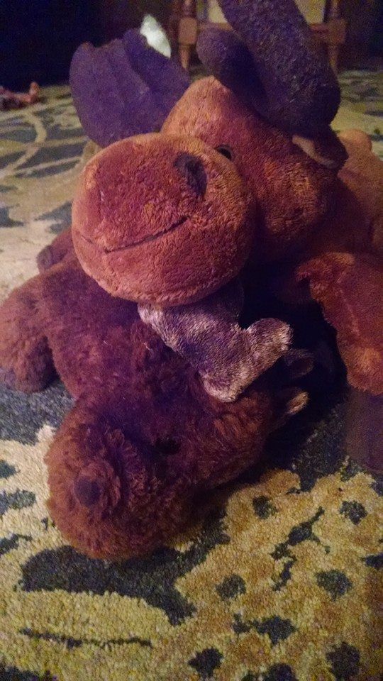stuffed-animal-moose