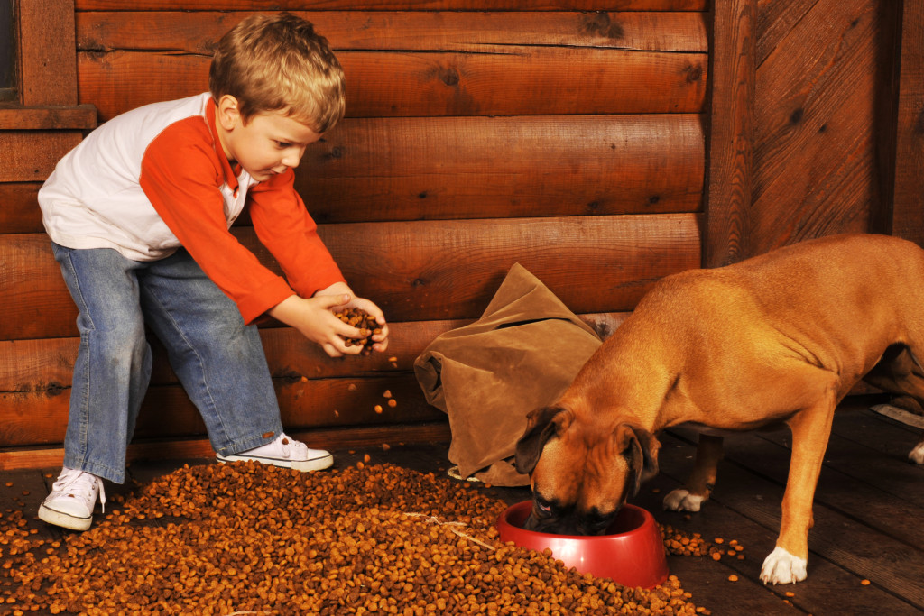 bigstock-Feeding-The-Dog-2541412