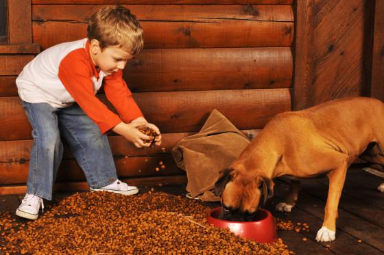 bigstock-Feeding-The-Dog-2541412